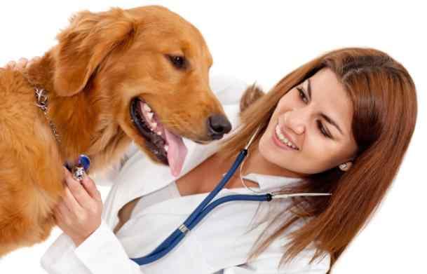 獸醫管理系統
